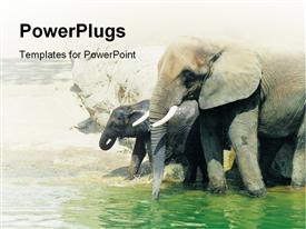 PowerPoint template displaying two elephants walking in the water by the shore
