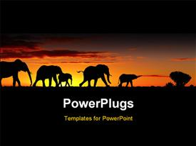PowerPoint template displaying a group of elephants with sunset in the background
