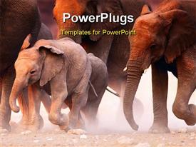 Elephant herd on the run in Etosha desert powerpoint design layout