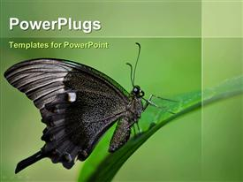 PowerPoint template displaying emerald Swallowtail butterfly, Papillion palinurus, perched on leaf