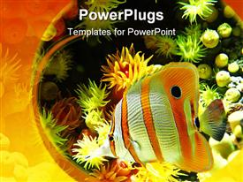 Exotic fish swimming in an aquarium with low dof template for powerpoint