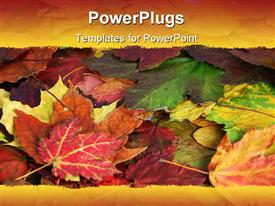 PowerPoint template displaying a close up view of lots of colourful leaves