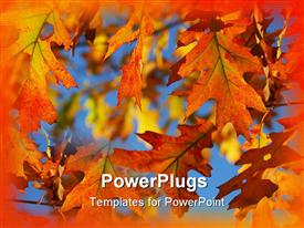 PowerPoint template displaying close-up of colorful fall oak leaves against blue sky
