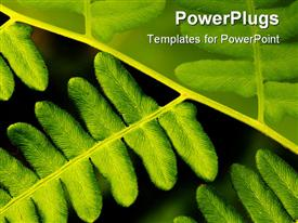Fern leaves template for powerpoint