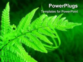 PowerPoint template displaying green fern leaf on blurred grass, glowing leaf in forest