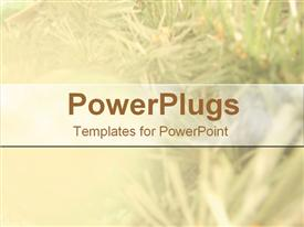 PowerPoint template displaying frosted Christmas pine needles, holidays, tree