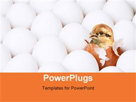 PowerPoint template displaying new-born chick in egg among the lot of white eggs