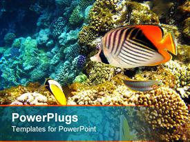 PowerPoint template displaying tropical fishes and coral reef in Red sea in the background.