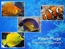 PowerPoint template displaying gold fish
