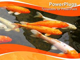 Koi pond with beautiful fish and a reflection in the water presentation background