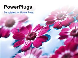 PowerPoint template displaying close-up of red flowers floating and water