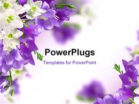 PowerPoint template displaying blue campanulas and white lily with white color