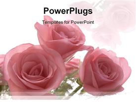 PowerPoint template displaying roses as a metaphor love weddings relationships mother celebrations on a white background