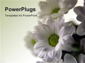 PowerPoint template displaying bunch of white spring flowers in the background.