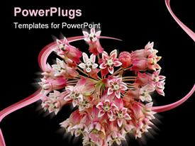 PowerPoint template displaying very clean depiction of flower in the background.