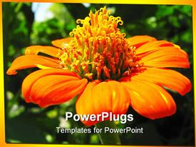 PowerPoint template displaying large orange and yellow sun flower wit a blurry background