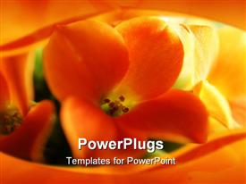 PowerPoint template displaying close-up view of the inside of a sunflower