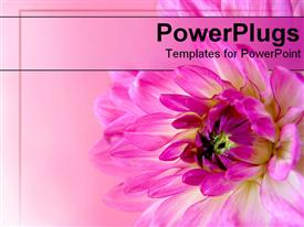 PowerPoint template displaying close-up of pink flower