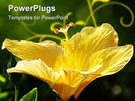 PowerPoint template displaying close up red Hibiscus with nice green background