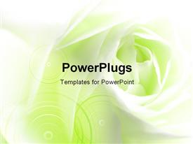PowerPoint template displaying close-up of a white rose with green color