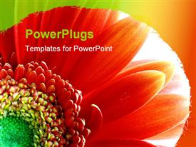 PowerPoint template displaying flower. The light in the background is intended to give it a divine look