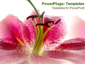 PowerPoint template displaying pink flower close-up in the background.