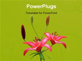 PowerPoint template displaying red color lily blossom with green color