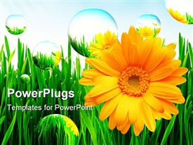 PowerPoint template displaying beautiful yellow sunflowers on green grass with bubbles floating around