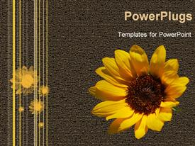 PowerPoint template displaying a sunflower with grayish background and place for text