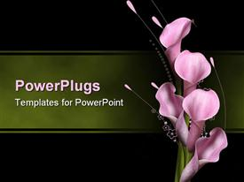 PowerPoint template displaying five opened lilac pink callas over delicate floral pattern on green and black background