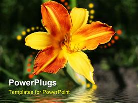PowerPoint template displaying beautiful orange day lily with bright reflection on water surface