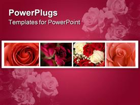PowerPoint template displaying bouquet of red and white roses in water glistening with water droplets