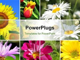 PowerPoint template displaying collage of the beautiful summer colorful flowers