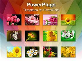 PowerPoint template displaying twelve depictions of flowers, pink tulips, sunflowers, white flowers, yellow, white pink and yellow flowers