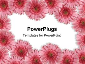 PowerPoint template displaying beautiful border ( frame ) from gerberas for your spring designs