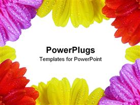 PowerPoint template displaying purple, yellow and red daisies with dew on them framing white background