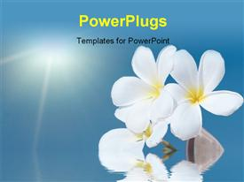 PowerPoint template displaying tropical flower Plumeria alba and seashell with sea