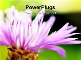 Its flower from my home garden good background powerpoint template