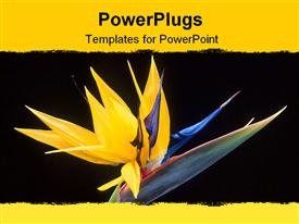 PowerPoint template displaying flower of bird of paradise in the background.