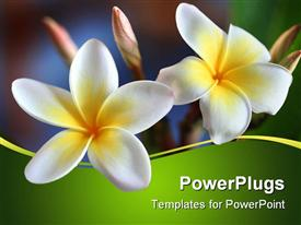 PowerPoint template displaying two white flowers close ups in bright green background
