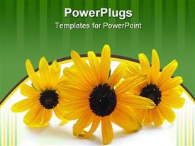 3 yellow flowers isolated on a white background powerpoint theme