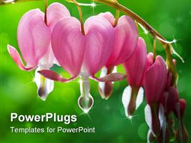 PowerPoint template displaying dew drops falling from bleeding heart flowers