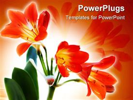 Beauty And Tenderness Red Flowers, Soft focus powerpoint design layout