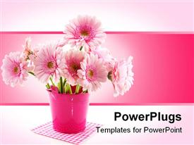 Bouquet pink Gerber flowers isolated over white powerpoint template