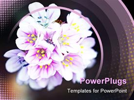 Bouquet of wild little flowers template for powerpoint