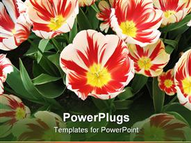 PowerPoint template displaying lots of beautiful red, yellow and white colored flowers