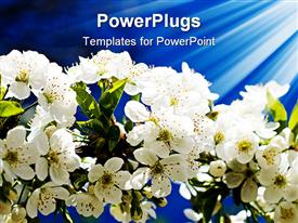 PowerPoint template displaying lots of white flowers hanging from a plant with light rays on them