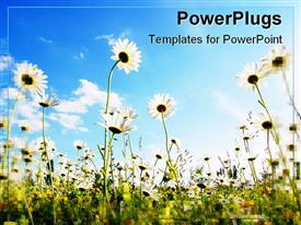 PowerPoint template displaying a number of flowers in the garden with clouds in the background