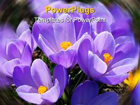 PowerPoint template displaying a number of purple flowers together
