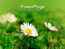 PowerPoint template displaying flowers_0413
